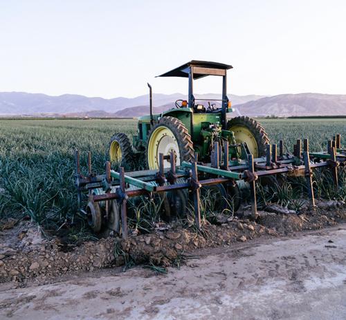 Tractor in sweet potato field